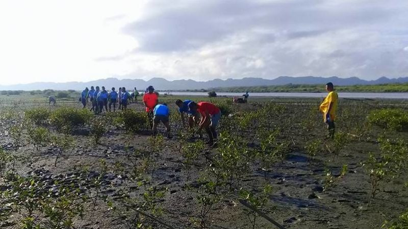 LOOK: 500 mangroves planted in Brgy. Bitoon, Jaro