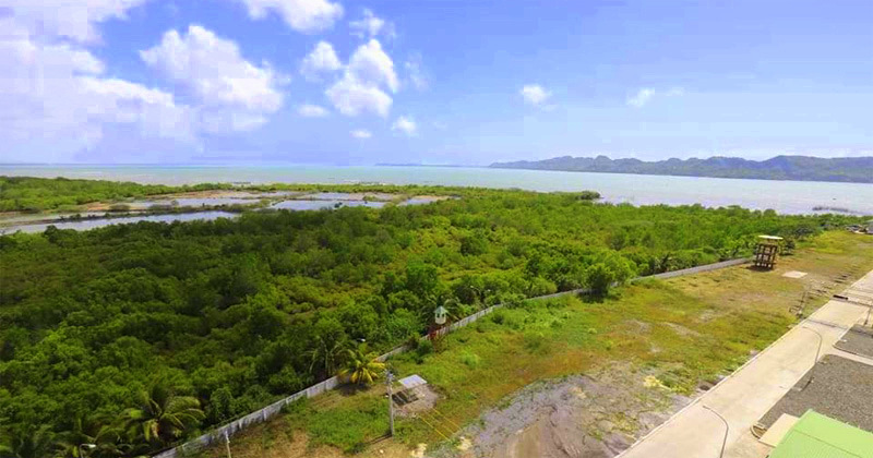 Iloilo City Mangrove Ecopark Forest.