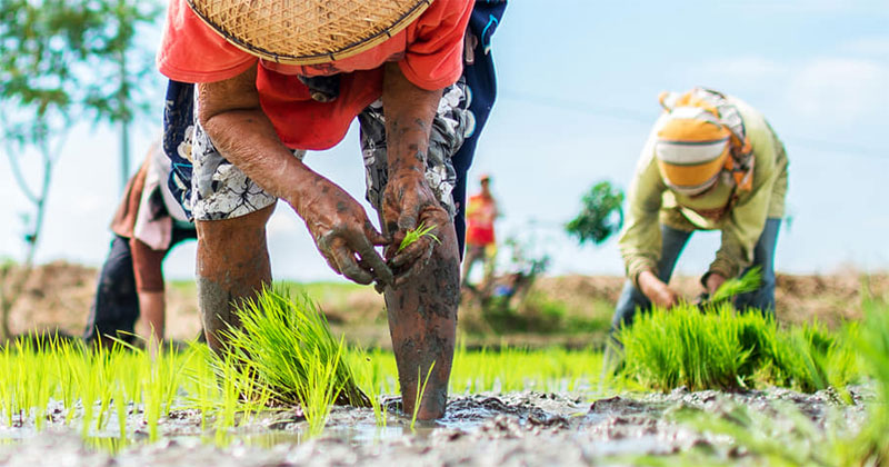 Western Visayas farmers to receive free seeds, fertilizers this wet season