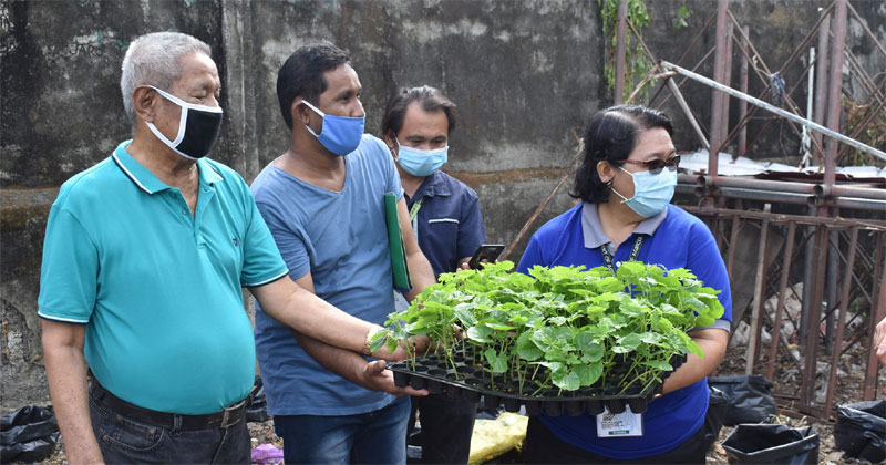 DA pilots urban gardening in Iloilo City thru 'adopt a barangay' program